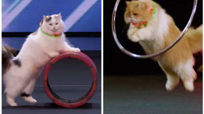 """Getrainde katten doen zelfs mond van Simon Cowell openvallen in 'America's Got Talent': """"Dit hebben we nog nooit gezien!"""""""