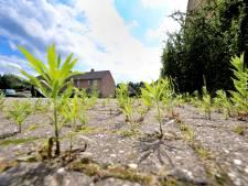 Chemische Roundup tegen onkruid mag weer, maar waar kiezen Hellendoorn, Rijssen-Holten en Wierden voor?