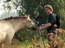 Kaliwaalfilm zonder koniks en rode geuzen, nu wel met taurossen en Exmoor-paarden