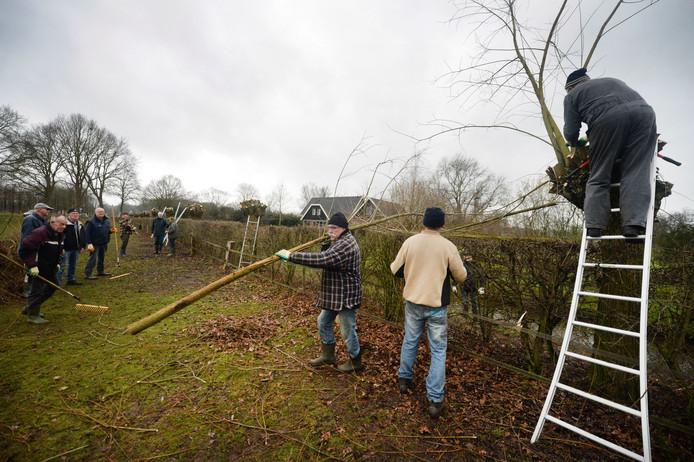 Vrijwilligers van IVN Diepenheim bezig met het knotten van wilgen om te voorkomen dat ze dood gaan.