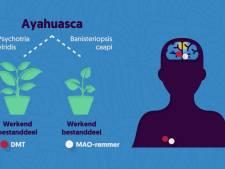 Waarom ayahuasca kan helpen tegen stress en depressies
