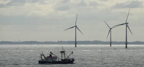 Windparken veranderen leven in zee