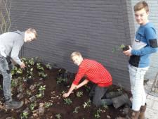 Leerlingen Canisius leggen groen aan bij sportcentrum in Tubbergen