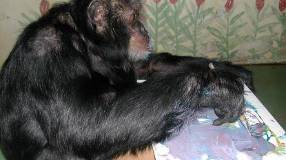 Hoe gaat het eigenlijk nog met Bubbles, de chimpansee van Michael Jackson?