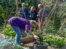 In de Roggeveenstraat delen ze niet alleen de oogst: 'Ik heb in deze tuin zo veel mensen ontmoet en gesproken'