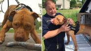 Deze pitbull kreeg bijna een spuitje. Nu is hij de eerste politiehond van Ohio
