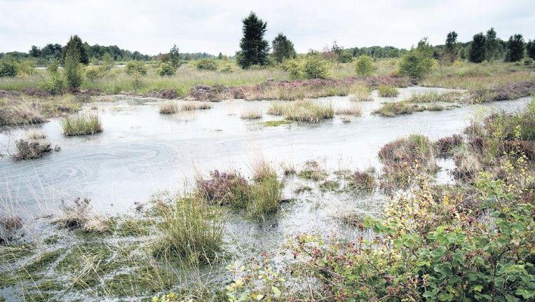 Het Drents-Friese Wold, een natuurgebied van Staatsbosbeheer, komt samen met het Dwingelderveld van Natuurmonumenten onder nieuw beheer Beeld Wilco Dragt, Buitenbeeld