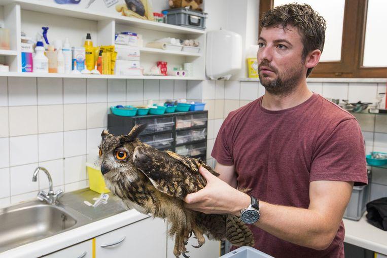 Vorige week stond bioloog Frederik Toelen ons te woord over een verzwakte Oehoe in het Natuurhulpcentrum.