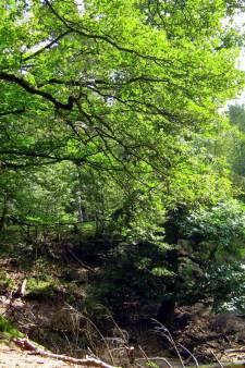 Utrechts Landschap wil tien procent extra natuur aankopen