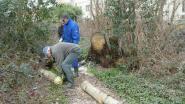 Ravage in natuurgebieden na storm: Natuurpunt verwijdert tientallen omgewaaide bomen