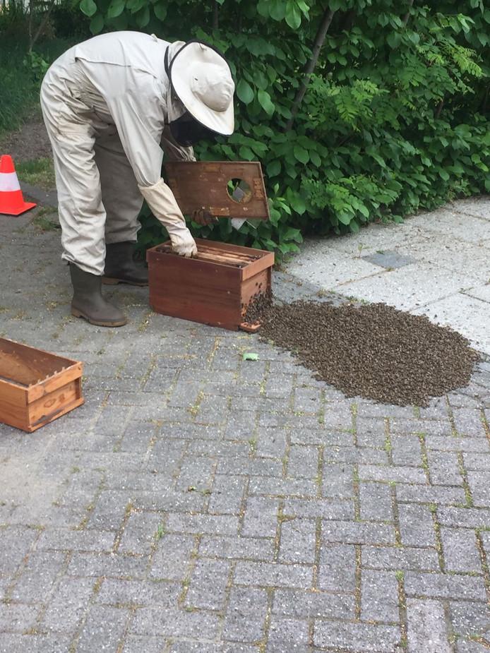 Imker verwijdert de bijen.