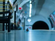 Un duel entre deux souris dans le métro, une photo insolite primée par les internautes