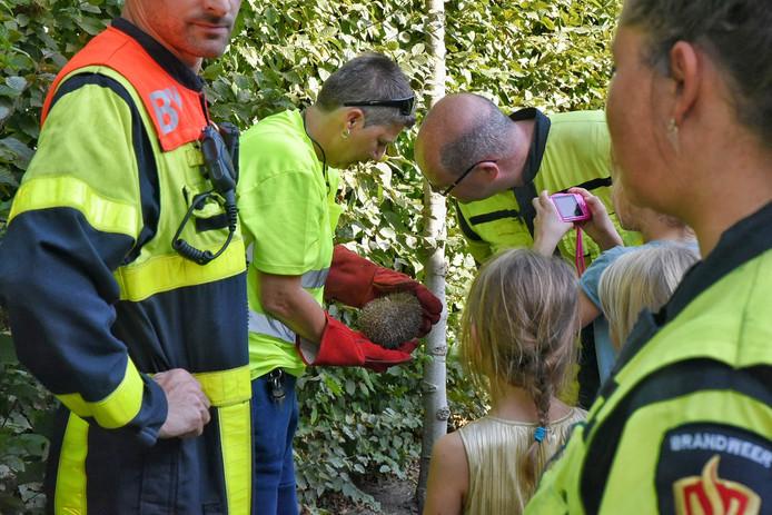 De egel is meegenomen door de dierenambulance.