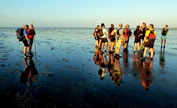 Een groep wandelaars met gidsen in de avondzon op het wad bij Wierum. Zomer in Nederland, Zwarte Haan.