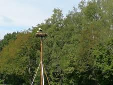 Eerste ooievaars vinden thuis bij Wijngaard Nijrees in Almelo