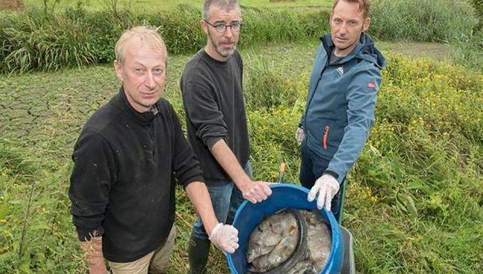 Peter Van de Kerckhove en Thijs Litaer, conservatoren van Paddenbroek en milieuschepen Lode De Kimpe hebben zaterdag wel honderd kilogram dode vis opgehaald.