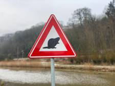Een wel heel bijzonder verkeersbord bij Persingen waarschuwt voor....overstekende bevers!