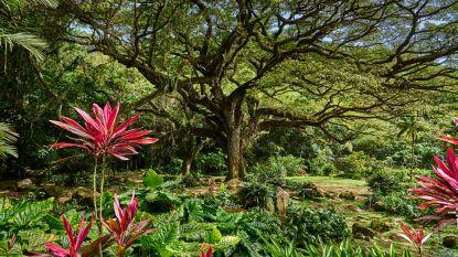 6 redenen om hartje winter naar bloemeneiland Martinique te reizen