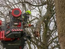 Loshangende tak zorgt voor gevaarlijke situatie in Gameren