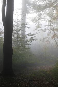 Loofbomen krijgen meer de ruimte op de Laarsenberg in Rhenen