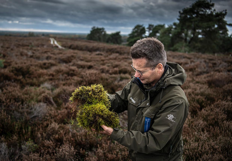 Boswachter Jos Schouten met Heideklauwtjesmos die onder de heide plant woekert en er voor zorgt dat er geen nieuwe hei kan groeien.