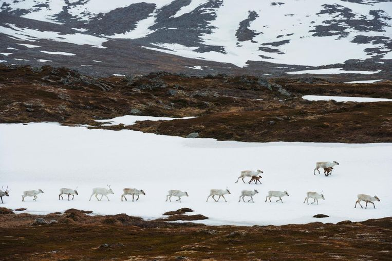 Voor W.F. Hermans was het Noorse Finnmark de inspiratie voor zijn roman. Beeld Getty Images