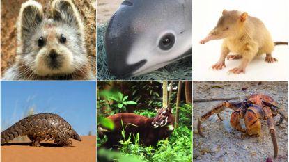 Laatste bekende vrouwtje van weekschildpadden overleden: ook deze dieren dreigen uit te sterven