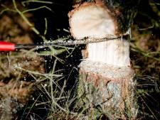Gratis boom in je tuin? De gemeente Putten komt hem planten