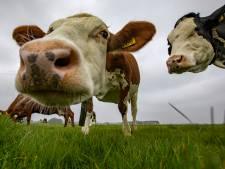 Juridische familiestrijd over boerenbedrijf in De Lutte