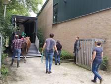 Schröders en Potijk uit Tubbergen brengen paarden Roessingh naar vakantieadres