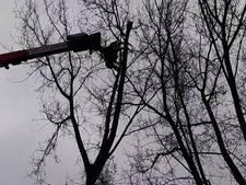Knabbelen aan bomen in Wantijpark