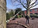 Valbeveiliging door Ton Stokwielder van Storix Boom- & Landschapsbeheer van een rode beuk in de pastorietuin in Waalwijk. Ton Stokwielder en de man met de luchtboor is Willy Detiger
