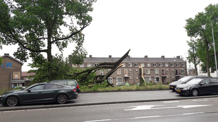 Afgebroken boom aan de Piuslaan (Ring) in Eindhoven.