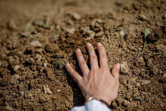 Een Bosnische moslimvrouw beroert het versgegraven graf van haar vader, slachtoffer van de genocide bij Srebrenica in 1995. Op de begraafplaats in Potocari, vlakbij Srebrenica, werd op 11 juli jongstleden een herdenkingsplechtigheid gehouden.