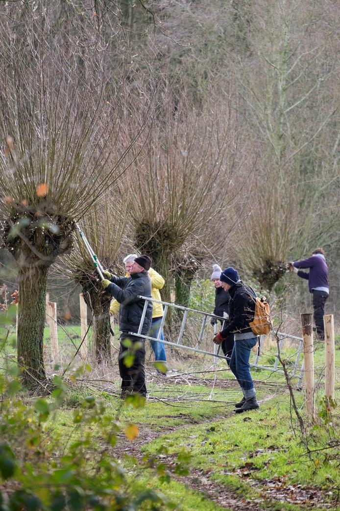 Vrijwilligers snoeien wilgen in 't Goor.