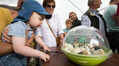 Landbouwevenement Agricultura verwelkomt nieuw leven: kinderen in de ban van pasgeboren kuikentjes
