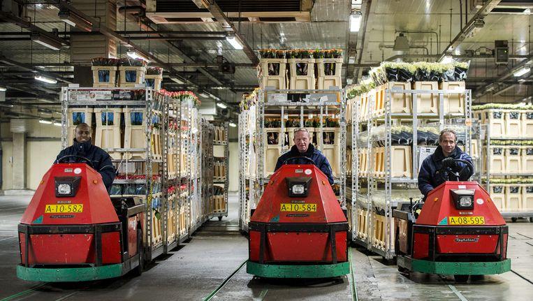 Medewerkers van bloemenveiling Aalsmeer verdelen bloemen Beeld anp