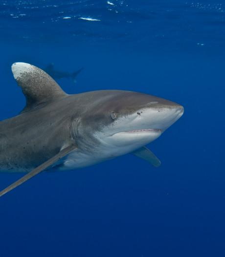 35-jarige Française verliest handen en borst bij haaienaanval