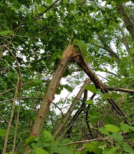 Schade aan bomen en struiken over zeker honderd meter in Vinkel, vermoedelijk opzet