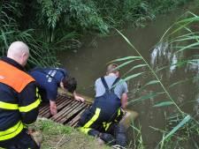 Brandweer redt zes eendjes uit duiker in Waalwijk