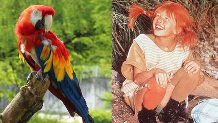 Rosalinda, de papegaai die in de films over kinderheld Pippi Langkous meespeelde.