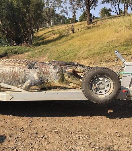 Mogelijk grootste krokodil in 30 jaar  sterft door kogel in kop