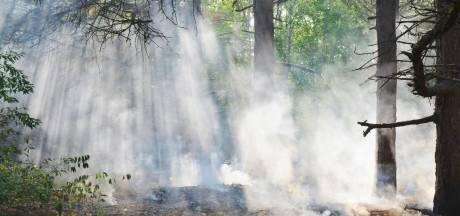 Gortdroge Brabantse natuurgebieden tijdens 'natuurbrandenmaand' april: 'Ik heb het nog nooit erg zo gezien'