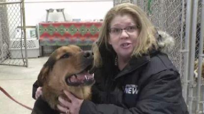 Een week goed nieuws: agent redt onderkoelde hond uit kanaal en andere verhalen die je blij maken