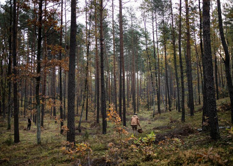 Piotr Malecki en Anna Malecka tijdens het plukken van paddestoelen in de buurt van Lochow, Polen.  Beeld Maciek Nabrdalik / VII
