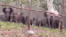 En plots staat daar een kudde olifanten in de tuin