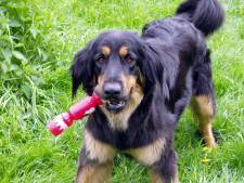 'Schaf hondenbelasting af in gemeente Altena'