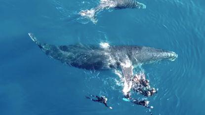 VIDEO. Walvis is opdringerige toeristen beu en deelt waarschuwende tik uit