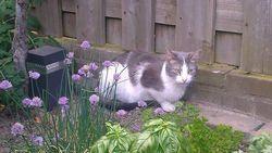 Kat vermoord en opgehangen in tuin