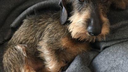 """Hondje Ernest weer terecht na tien dagen zoeken: """"Onze gezinnetje is weer compleet, net op tijd voor gezellige Kerst"""""""